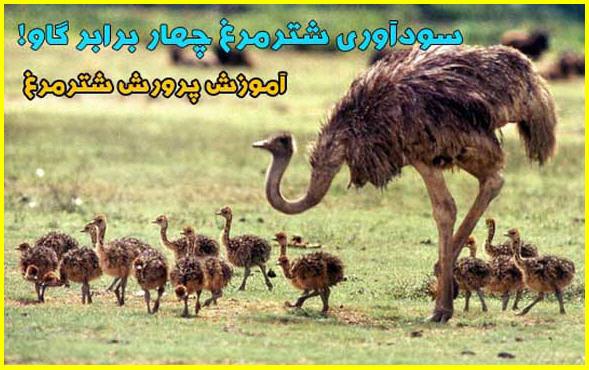 http://kasbokar.avablog.ir/upload/picture/1477280290.jpg